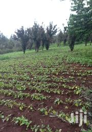 Land For Sale In Kitale | Land & Plots For Sale for sale in Uasin Gishu, Moi'S Bridge