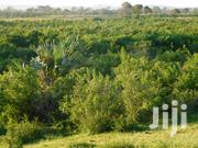Vacant Prime Land / Plot for Sale in Vipingo Kilifi, | Land & Plots For Sale for sale in Mombasa, Mkomani