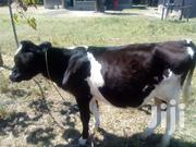 Friesian Male Incalf 1yr N 3 Months | Other Animals for sale in Kiambu, Githiga (Githunguri)