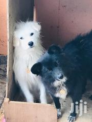 Lovly Dogs Looking for Are New Home | Dogs & Puppies for sale in Nairobi, Komarock