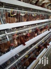 Automatic Battery Cages | Livestock & Poultry for sale in Nairobi, Nairobi Central
