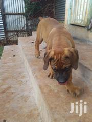 Different Puppies | Dogs & Puppies for sale in Migori, Central Kamagambo