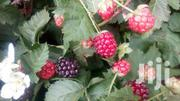 Assorted Berries Red Raspberry,Blackberry,Black Raspberry,Grapes Etc | Feeds, Supplements & Seeds for sale in Nairobi, Nairobi Central