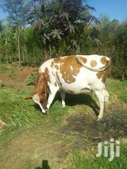Good Heifer For Breeding. | Other Animals for sale in Uasin Gishu, Ziwa