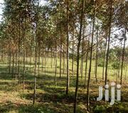 Trees For Shatter Posts | Building Materials for sale in Laikipia, Salama