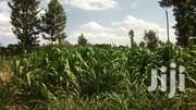 100x40 Plot In Kawaida | Land & Plots For Sale for sale in Kiambu, Cianda