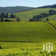 1200 Acres Tea Farm In Nandi | Land & Plots For Sale for sale in Nandi, Nandi Hills