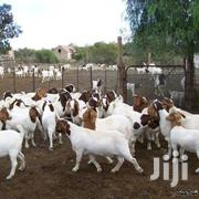 Goats Sheep And Rams | Livestock & Poultry for sale in Nairobi, Kariobangi North