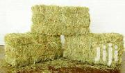 Hay For Sale - Boma Rhodes | Feeds, Supplements & Seeds for sale in Uasin Gishu, Huruma (Turbo)
