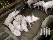 Piglets | Livestock & Poultry for sale in Nakuru, Bahati