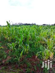 Selling Plots Kasuku | Land & Plots for Rent for sale in Nyandarua, Karau