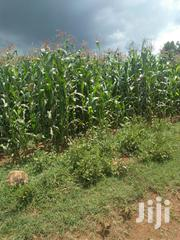 Land 10 Acres In Kitale Legacy 5 Kilometers From Main Road | Land & Plots For Sale for sale in Trans-Nzoia, Cherangany/Suwerwa