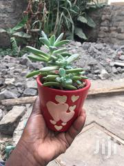 Indoor Plants . | Garden for sale in Nairobi, Kasarani
