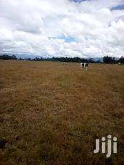 16 Acres In Kinangop Njabini Ksh 1.2m Per Acre. | Land & Plots For Sale for sale in Nyandarua, NjabiniKiburu