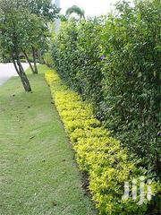 Design Landscaping Services. | Landscaping & Gardening Services for sale in Nairobi, Kitisuru