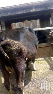 A Freshian Cow Second Caving Available | Livestock & Poultry for sale in Nyandarua, Githabai