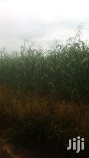 2 Acrs For Silage Fresh Green Maize | Land & Plots For Sale for sale in Nandi, Nandi Hills
