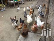 Kienyeji Chickens | Livestock & Poultry for sale in Nakuru, Rhoda
