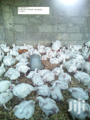 Broilers For Sale | Livestock & Poultry for sale in Nairobi, Kahawa West