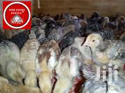 Improved Kienyeji Chicks, Kari, Kuroilers And Rainbow Roosters | Livestock & Poultry for sale in Nakuru, Kiamaina