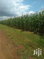 Land Five Acres In Bayete Five Kilometers From Main Road | Land & Plots For Sale for sale in Uasin Gishu, Tulwet/Chuiyat