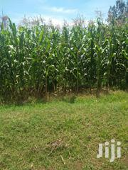 Land 4 Acres In Nigeria With Ready Title Deed | Land & Plots For Sale for sale in Uasin Gishu, Ngeria