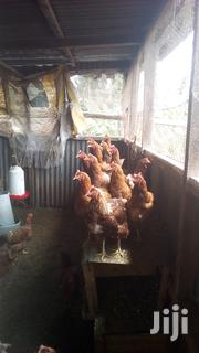 X-layers For Rare And Also For Meat | Livestock & Poultry for sale in Nairobi, Nairobi Central