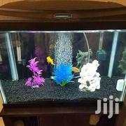 Amazing Aquariums | Pet's Accessories for sale in Nairobi, Roysambu