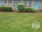 One Bedroom With Wifi to Let in Annex, Mti Moja, Pazuri, Blue Valley | Houses & Apartments For Rent for sale in Uasin Gishu, Racecourse