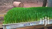 Fodder Single Tray Feed | Feeds, Supplements & Seeds for sale in Kiambu, Kinoo