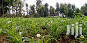 Half An Acre Land | Land & Plots For Sale for sale in Laikipia, Igwamiti