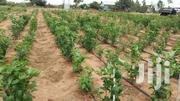 Chili Drip Irrigation System Drip Kit Dripline For Chili | Farm Machinery & Equipment for sale in Kilifi, Malindi Town