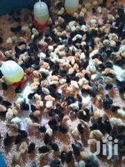 Mash Chicks Farm | Livestock & Poultry for sale in Makueni, Wote