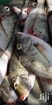 Sea Food Suppliers | Fish for sale in Mombasa, Shanzu