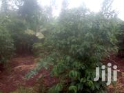 1¾ Acres Land With Tittle Deed | Land & Plots For Sale for sale in Kiambu, Mang'U
