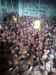 Layers For Sale 18 Weeks | Livestock & Poultry for sale in Nairobi, Nairobi Central