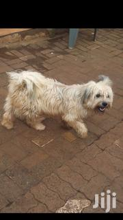 Dogs On Sale | Dogs & Puppies for sale in Nairobi, Karen