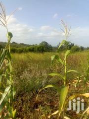40x80ft Residential Plots For Sale At Kenol Thangira(Red Soil). | Land & Plots For Sale for sale in Murang'a, Makuyu