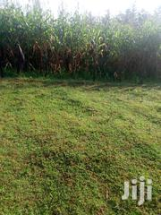 4arce At Chemnoet /Kabiyet Ward | Land & Plots For Sale for sale in Nandi, Kabiyet