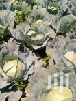 Ready Cabbages | Meals & Drinks for sale in Tigithi, Laikipia, Nigeria