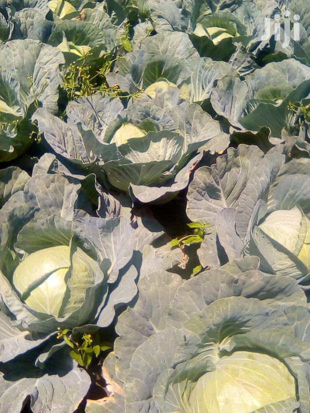 Archive: Ready Cabbages