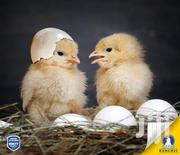 Mash Chicks | Livestock & Poultry for sale in Makueni, Wote