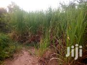 Prime Land for Sale | Land & Plots For Sale for sale in Kisumu, Miwani