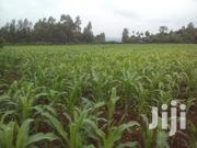 40x80 3 Plots for Sale in Ting'ang'a Riabai Anma 1.2m Each   Land & Plots For Sale for sale in Kiambu, Ndumberi