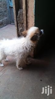 3months Old Vaccinated Puppy for Sale 1female 2males | Dogs & Puppies for sale in Nairobi, Komarock