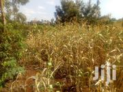 75x100ft Plot at Golf View Estate(Githingiri) for Sale(Red Soil)   Land & Plots For Sale for sale in Murang'a, Kangari