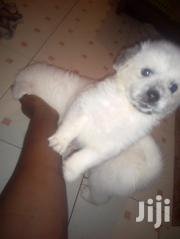 Puppies Looking For New Home | Dogs & Puppies for sale in Nairobi, Roysambu