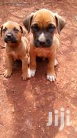 Dog Trainer,Consultancy Firm | Dogs & Puppies for sale in Karura, Nairobi, Nigeria