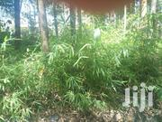 Bamboo Seedlings | Feeds, Supplements & Seeds for sale in Bungoma, Maeni