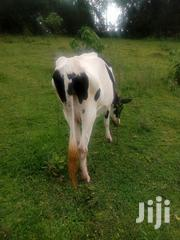 Second Calf Incalf 6 Months | Livestock & Poultry for sale in Nandi, Kapsabet